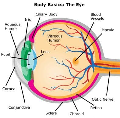 Eyes | mannatacademy.com eyes Eyes | Mannat Academy Eyes