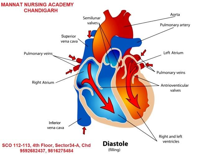 Cardiac Cycle | Mannatacademy.com