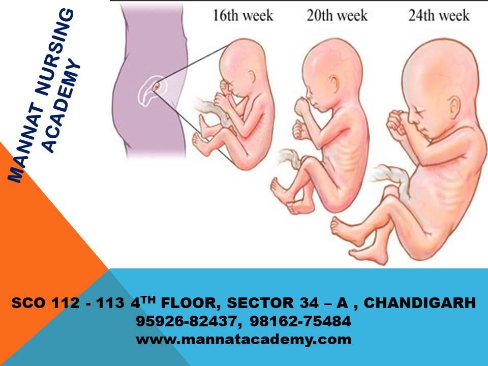 Second trimester of pregnancy   mannatacademy.com